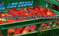 Prawdziwy koszt truskawki